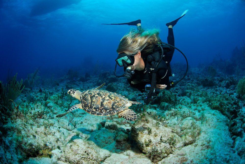 O mergulho profissional recreativo é outra experiência incomparável Foto: Lawson Wood/Divulgação
