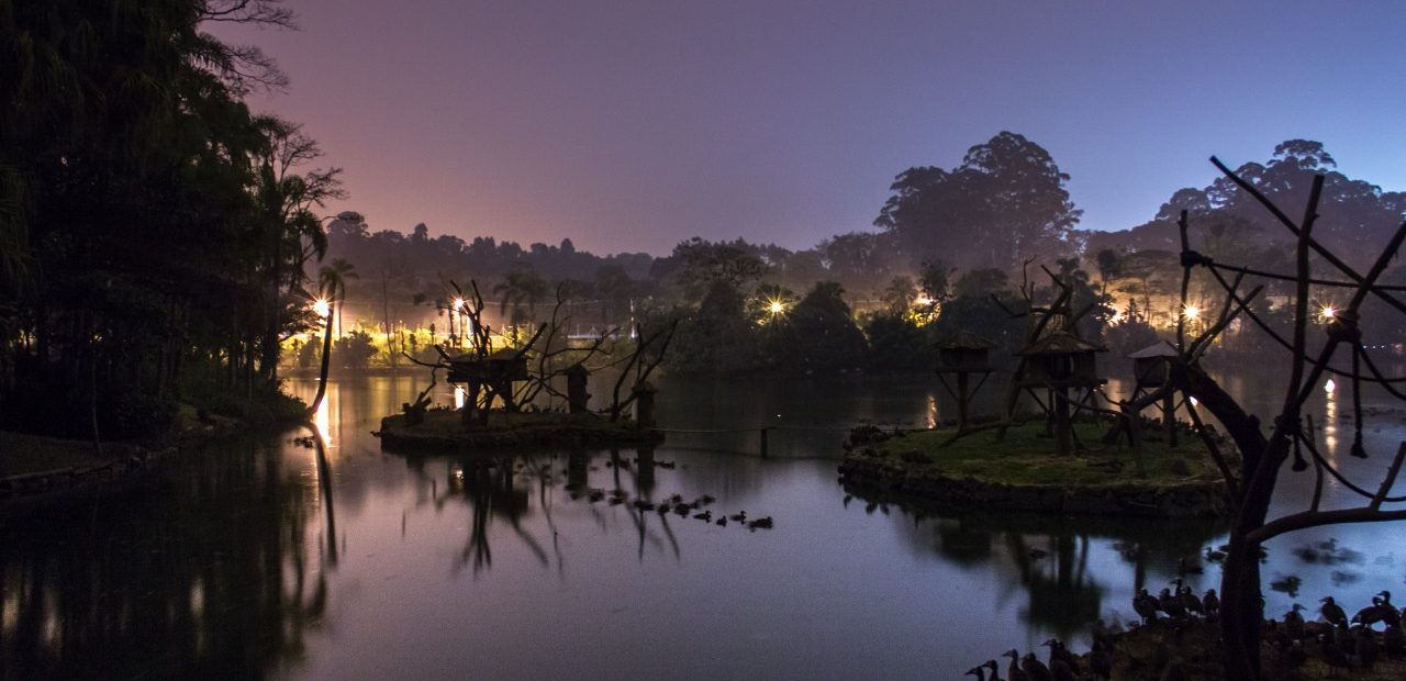 Zoo noturno Foto: Carlos Nader/Divulgação