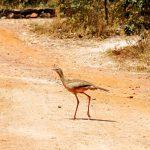 Cirena na Reserva Ecológica de Vargem Grande Foto: Eduardo Andreassi/Divulgação