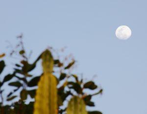 Fim de tarde e super lua já aponta no Morro de São Francisco. Foto: arquivo pessoal.